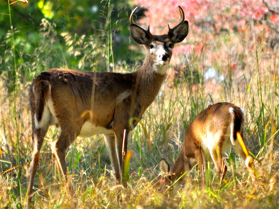 Buck and Babe_CSC0131