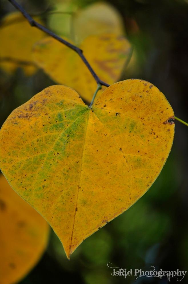 Yellow Leaves 2_Watermark_DSC0243